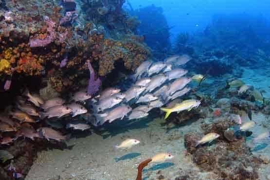 a look at the coral reef fish and how it readies a nest site Testexistsandin/anyinexistssql / you have a collection of words and you need just the unusual ones well, it is simple, the uncommon words don't exist in your table.