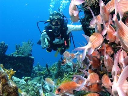 SCUBA_Fish