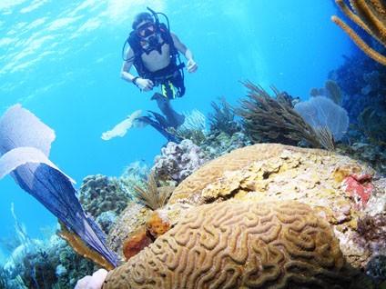 SCUBA_Reef