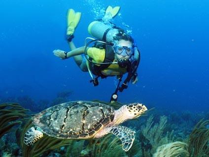 SCUBA_Turtle